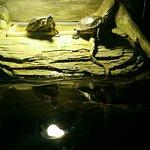 Photo de SEA LIFE London Aquarium