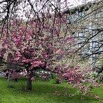 Foto di Hokkaido University Sapporo Campus