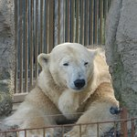 Photo of Rotterdam Zoo