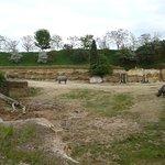 la vallée des rhinocéros 2, avec la présence des 3 rhinos noirs.