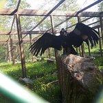 Foto de Vogelpark Niendorf