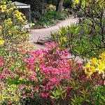kräftige Farbenspiele der Natur in der Flora von Köln
