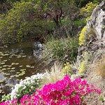 Azaleenpracht am See im Botanischen Garten ( Flora )