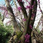 Blüten krachen aus dem Stamm heraus wow die Natur ! (Flora)