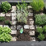 Kryddland med gräslök, vitlök, basilika, timjan, mynta, citronmeliss, rosmarin, dragon och orega