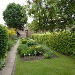 Lush looking garden.