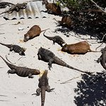 صورة فوتوغرافية لـ Cayo Iguana