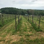 Sedlescombe Organic Vineyard Resmi