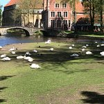 "The swan is the ""official"" bird of Bruges"