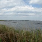 Φωτογραφία: Back Bay National Wildlife Refuge