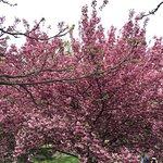Photo of New York Botanical Garden