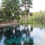Silver Springs State Park의 사진
