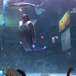 Foto Ripley's Aquarium
