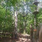Go Ape Treetop Adventure Courseの写真