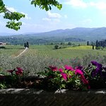 Il Frassine Farm & Farmhouse Tuscany