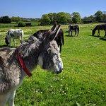 Bild från The Donkey Sanctuary