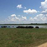 Sri Lanka Destination Tours-bild