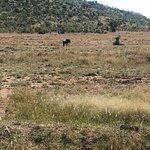Photo of Go Safari