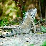 Zdjęcie Costa Rica Best Trips