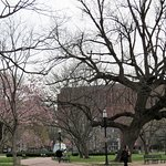 Photo of Lafayette Square