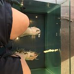 Photo of Athens Doctor Fish - Foot Therapy & Day Spa