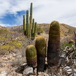 Cactus Forests