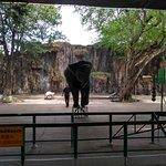 Photo of Sriracha Tiger Zoo