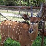 Safari Westの写真