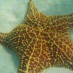 Une des nombreuses étoiles de mer de la piscine naturelle