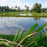 Bilde fra BaliGoBike - Bali Cycling Tours