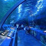 ภาพถ่ายของ Shinagawa Aquarium
