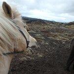 Islenski Hesturinn, The Icelandic Horse - Riding Tours Foto
