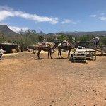 Camel Park ภาพถ่าย
