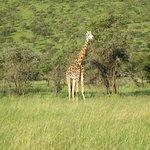 ภาพถ่ายของ Kilimanjaro Wonders Expedition Safari