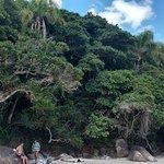 Playa con abundante matorral