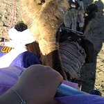 """Our travel agent on 2 days tour to Zagora with our clients """" camel"""