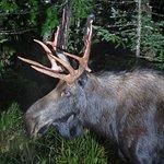 Foto di Pemi Valley Moose Tours