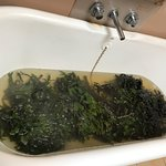 Foto de Soak Seaweed Baths