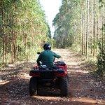 Quadriciclo Território Selvagem - entre eucaliptos