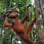 Bukit Lawang Guide Photo