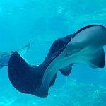 Photo de Sea World