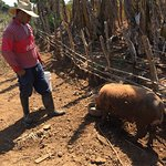 Discover Vinales Working on a Farm Tour - Feeding the Pig