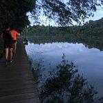 صورة فوتوغرافية لـ MacRitchie Nature Trail