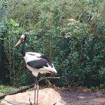 Photo de Singapore Zoo