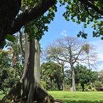 Photo of Foster Botanical Gardens