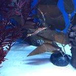Photo de Sea Life Sydney Aquarium