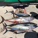 Tailhunter International Sportfishing의 사진