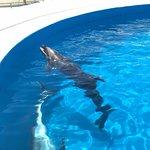 ภาพถ่ายของ Okinawa Churaumi Aquarium