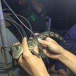 Foto de ACES / American Crocodile Education Sanctuary