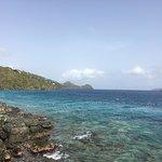 Billede af Coral World Ocean Park